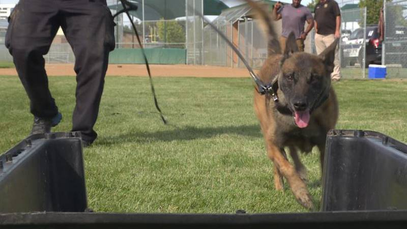These dogs aren't all bark, they perform essential tasks for the force.