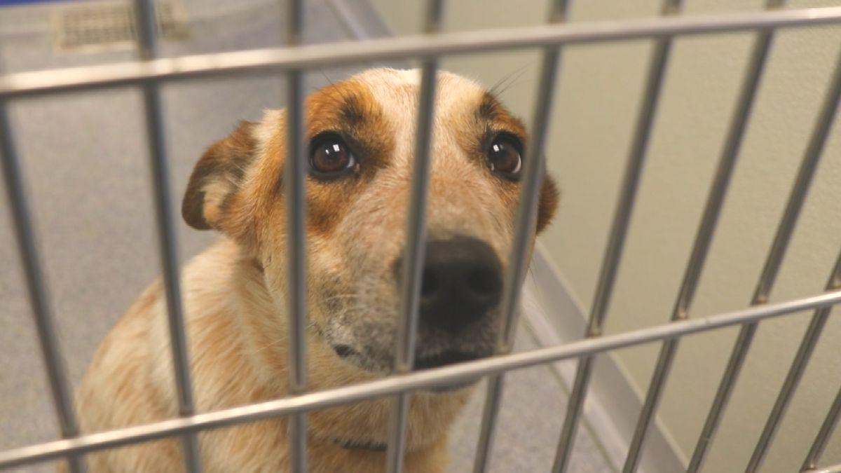MonDak Animal Rescue dog