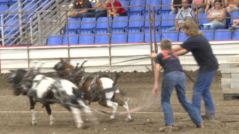 Pony pull contest at ND State Fair