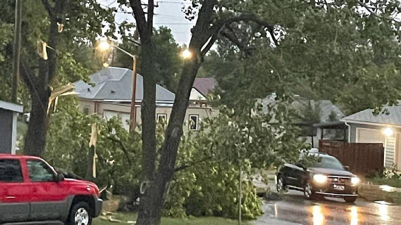 New Town Trees Uprooted
