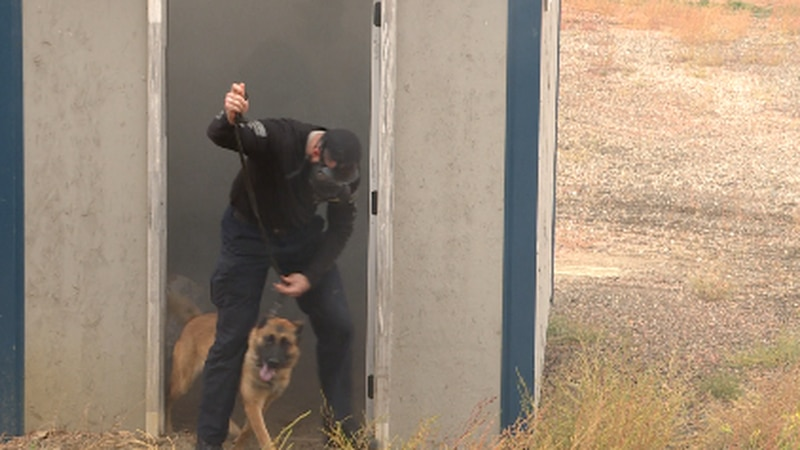 K9 handlers and dogs training in Dunn County