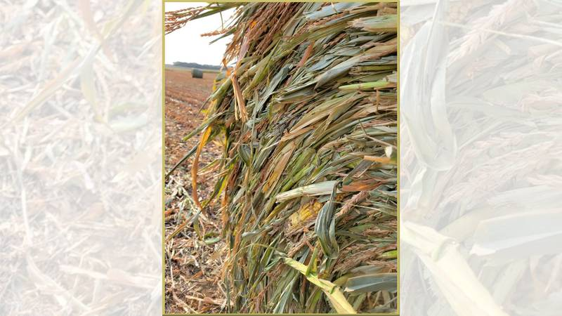 Producers have gotten creative in how they harvest their crops and keep their livestock fed.