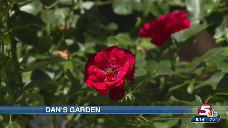 Dan's Garden