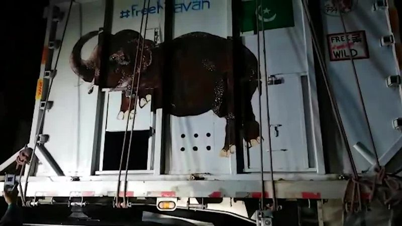 Pakistan's only Asian elephant, Kaavan, is loaded up to start a new life in Cambodia.
