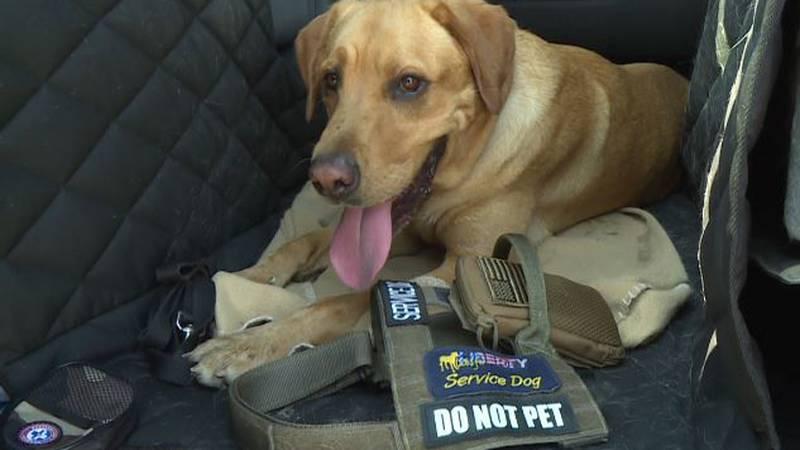 Harley — Mike Putnam's service-dog
