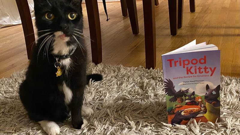 Tripod Kitty