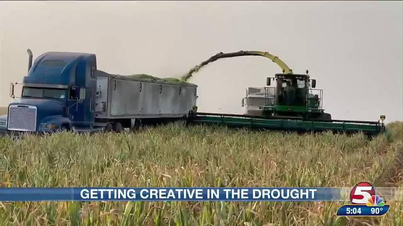 Bismarck farmer finds creative way to chop drought-stricken corn