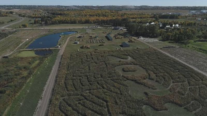 Berry Acres Pumpkin Patch corn maze