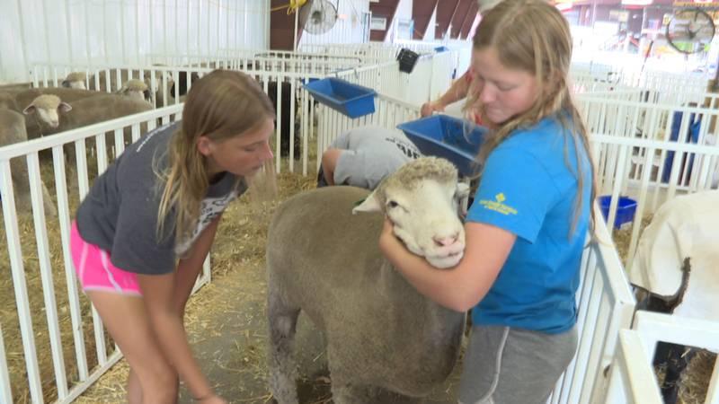 Bredahl family and their sheep