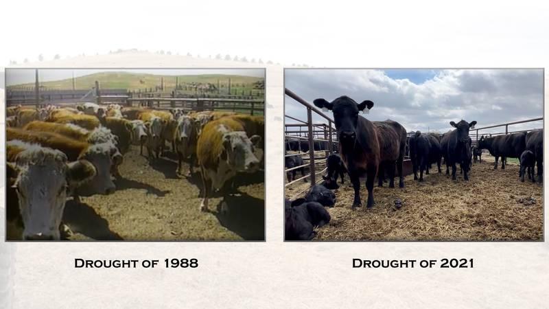 Drought Comparison